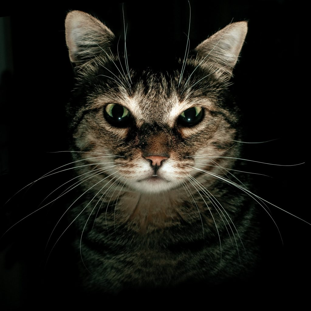 katten of hondenmens