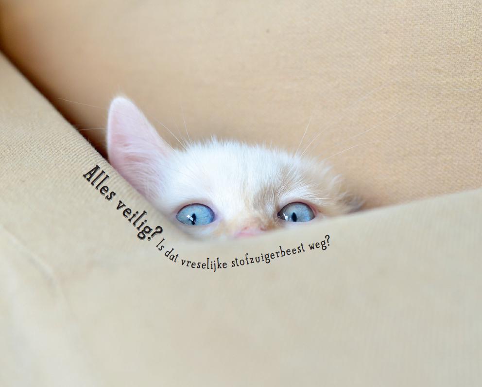 Kattenkopjes