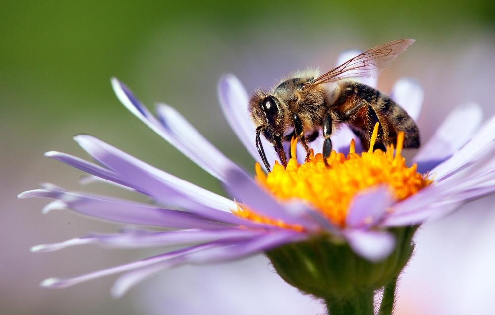 WEEK VAN DE BIJ]: Hoe kan jij de bijtjes helpen?Standaard Uitgeverij